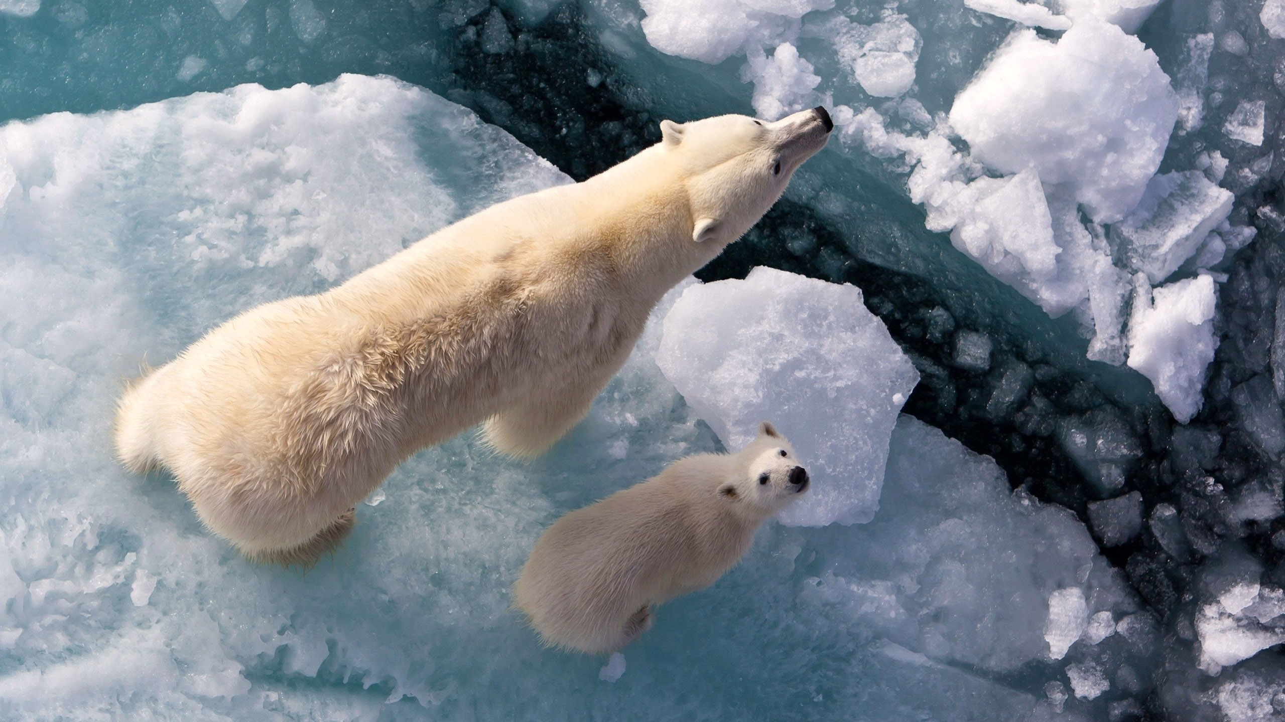 Arctic Protection And Global Warming
